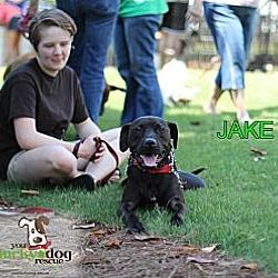Photo 4 - Labrador Retriever/Pit Bull Terrier Mix Dog for adoption in Alpharetta, Georgia - Jake