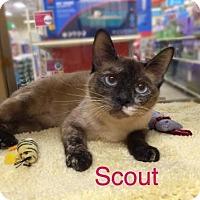 Adopt A Pet :: Scout - Baton Rouge, LA