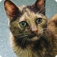 Adopt A Pet :: Carmelita (Foster) - NO FEE - Nashville, IN