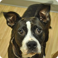Adopt A Pet :: Daphne - Hardeeville, SC