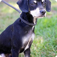 Adopt A Pet :: Forrester - San Diego, CA