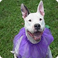 Adopt A Pet :: MILIAN - Atlanta, GA