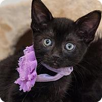Adopt A Pet :: Gidget - St. Paul, MN