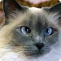 Adopt A Pet :: Yaya - Greeley, CO
