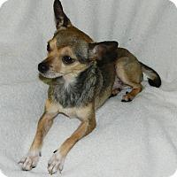Adopt A Pet :: Chico - Umatilla, FL