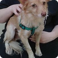 Adopt A Pet :: Flora - Thousand Oaks, CA