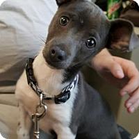 Adopt A Pet :: Maxine - Knoxville, IA