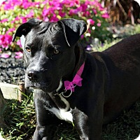 Adopt A Pet :: Katie - Bergen County, NJ