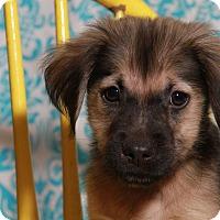 Adopt A Pet :: Rival-adoption pending - Des Moines, IA