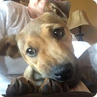 Adopt A Pet :: Tessa - Washington, DC