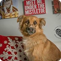 Adopt A Pet :: Char - Inglewood, CA