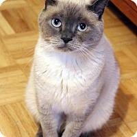 Adopt A Pet :: Caspar - Dallas, TX