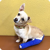 Adopt A Pet :: Wallace - santa monica, CA