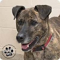 Adopt A Pet :: Olive - Troy, OH