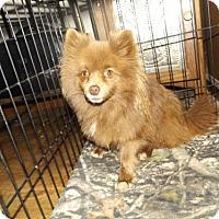 Adopt A Pet :: Hersery - Zaleski, OH