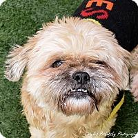 Adopt A Pet :: Fritter - Burlingame, CA