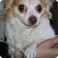 Adopt A Pet :: Zip - Bridgewater, NJ