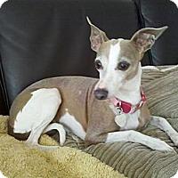 Adopt A Pet :: Asia - LA - San Diego, CA
