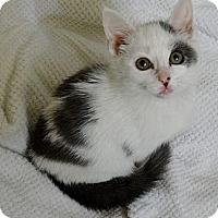 Adopt A Pet :: Milton - East Hanover, NJ