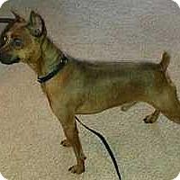 Adopt A Pet :: Skeeter - Columbus, OH