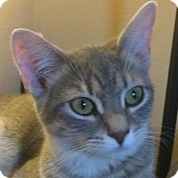 Adopt A Pet :: Jo - Winchester, CA