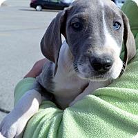 Adopt A Pet :: Justice-Adoption pending - Bridgeton, MO