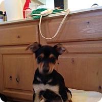 Adopt A Pet :: TITO JACKSON - Scottsdale, AZ