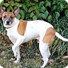 Adopt A Pet :: HAROLD