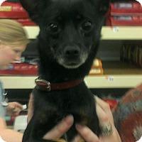 Adopt A Pet :: JULIETTE - Chicagoland area, IL