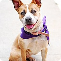 Adopt A Pet :: Sarillah - Foster Needed - Detroit, MI