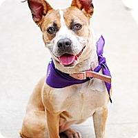 Adopt A Pet :: Sarillah - Detroit, MI