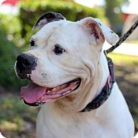 Adopt A Pet :: Pinyon - San Diego, CA