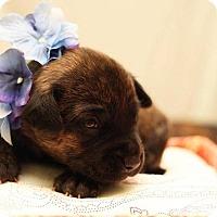 Adopt A Pet :: Naboo - Greensboro, NC