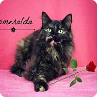 Adopt A Pet :: *ESMERALDA - Sugar Land, TX