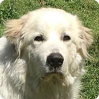 Adopt A Pet :: Monte - Staunton, VA
