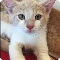 Adopt A Pet :: Davis - Atlanta, GA