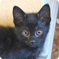Adopt A Pet :: Bobby Jo - Davis, CA