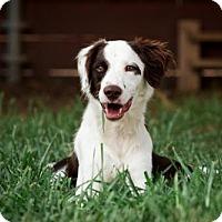 Adopt A Pet :: TX/Birdie (adoption pending) - Hampton Cove, AL