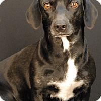 Adopt A Pet :: Ivory - Newland, NC