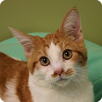Adopt A Pet :: Sunkist - Hastings, NE