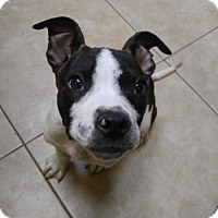 Adopt A Pet :: Sq litter - Monte - ADOPTED - Livonia, MI