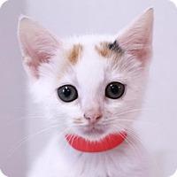 Adopt A Pet :: Reno - Murfreesboro, NC
