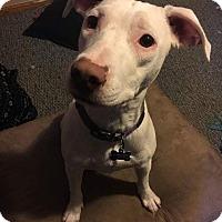 Adopt A Pet :: Nala - Rosemount, MN