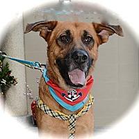 Adopt A Pet :: Teagan - Surrey, BC