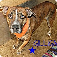 Adopt A Pet :: Gilligan - Lawrenceburg, TN