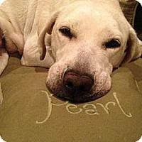 Adopt A Pet :: Granny Pearl - Richmond, VA
