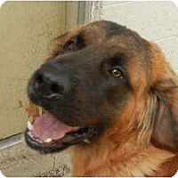 Adopt A Pet :: Bruno ADOPTION PENDING!! - Antioch, IL