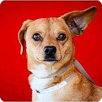 Adopt A Pet :: Romeo - Poway, CA
