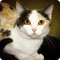 Adopt A Pet :: Itty Bit - Cheyenne, WY