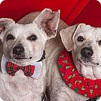 Adopt A Pet :: Li'l Bit - Westfield, NY